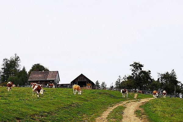 Remschniggalmhütte - Pogleihütte (W222), 2019-09-22T13:26:59+02:00