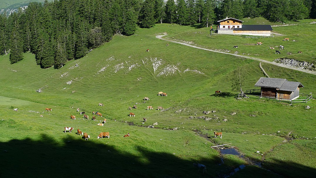Nassereither Alm (Muthenaualm)