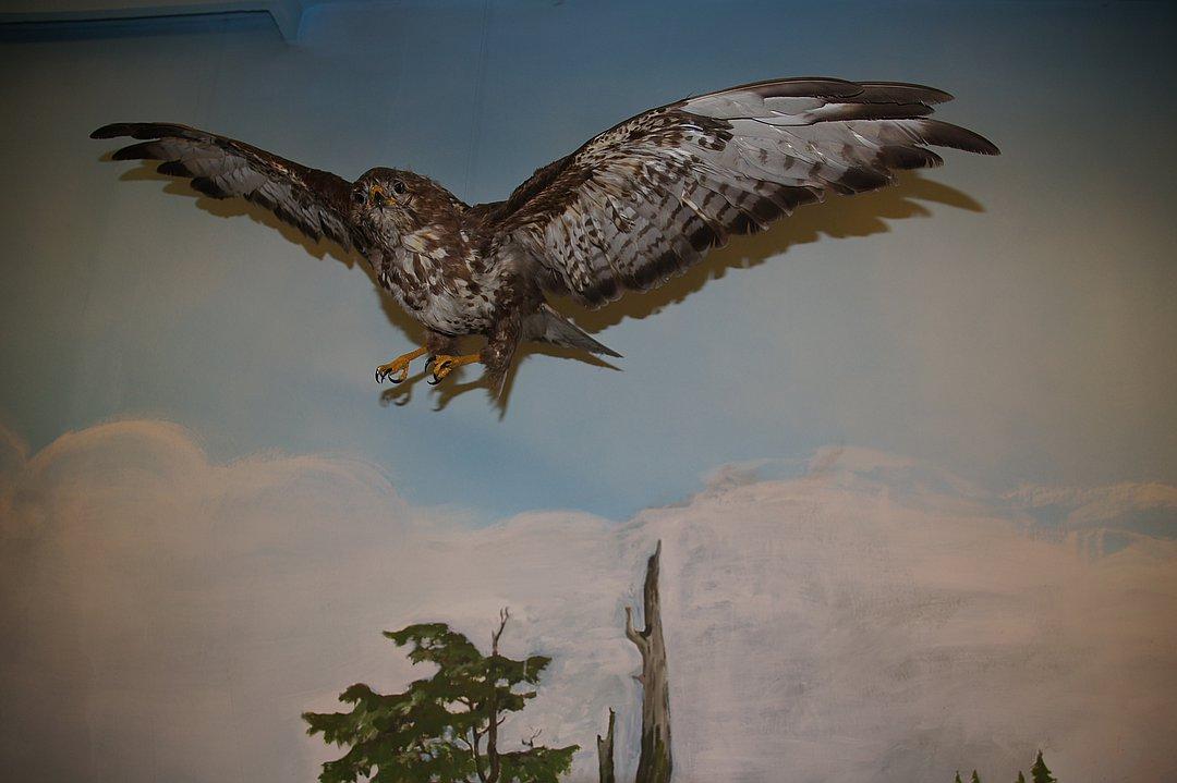 Vogelmuseum