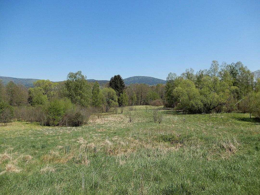 Naturschutzgebiet Torfau