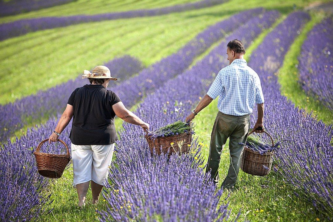Wunsum Lavendelmanufaktur